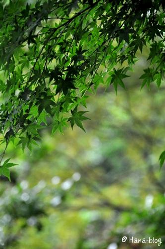 せせらぎ菖蒲園 064