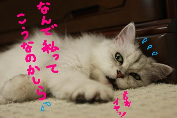 (10)_20110729224004.jpg