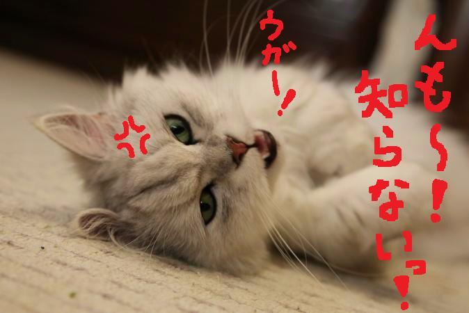 (11_20110627214427.jpg