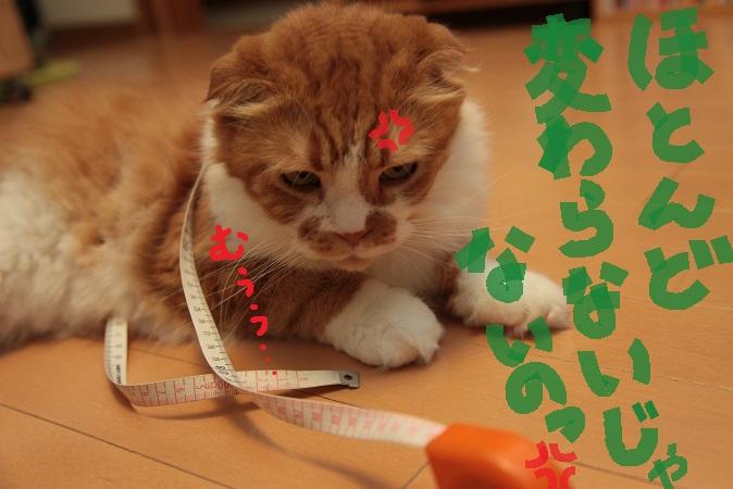 (4)_20110903042737.jpg