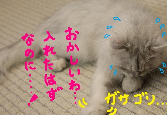(7)_20110729224005.jpg