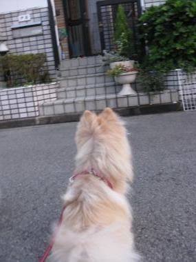 ダリちゃんの家の前