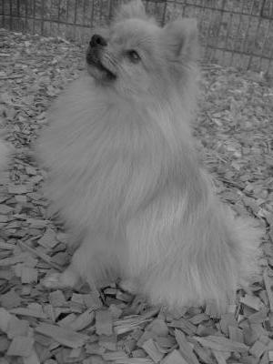 白黒・オスワリ