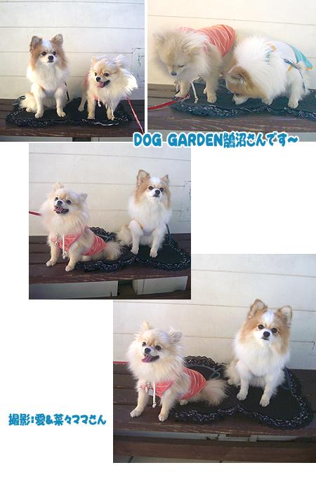 2009/10/19 DOG GARDENその1