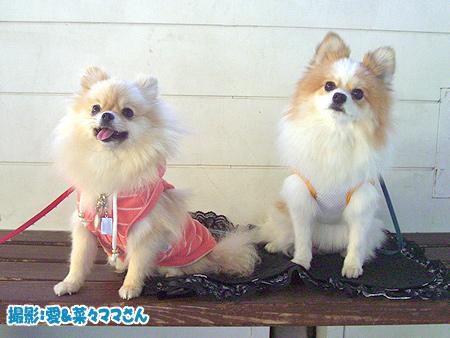 2009/10/19 DOG GARDENその2