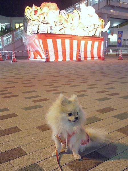 2009/10/19 東海大駅前てまり1