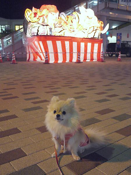 2009/10/19 東海大駅前てまり2
