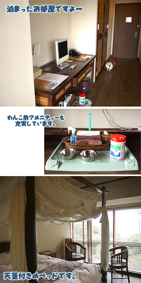 2009/10/22 伊豆旅行(その3)8