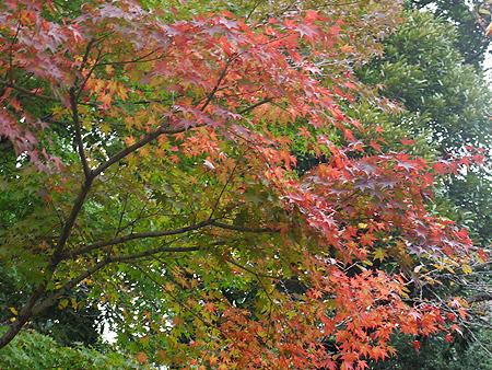 2009/11/10 野毛山公園1
