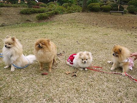 2009/11/10 野毛山公園3