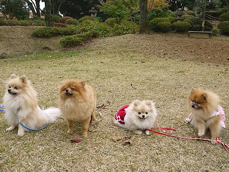 2009/11/10 野毛山公園4