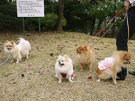 2009/11/10 野毛山公園5
