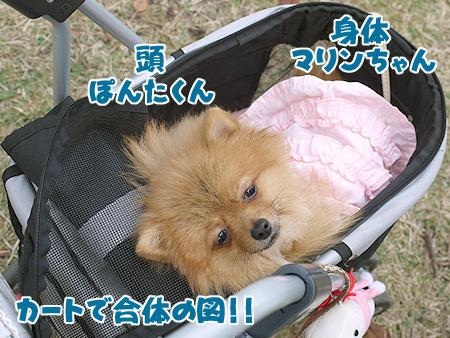 2009/11/10 野毛山公園6