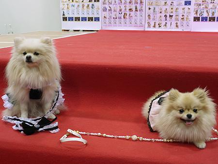 2009/11/22 ららぽ横浜5
