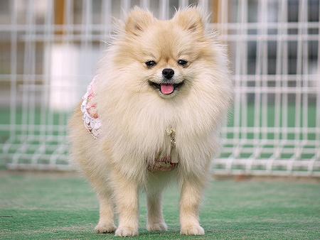 2009/11/27 DOG GARDEN鶴ヶ島1-1