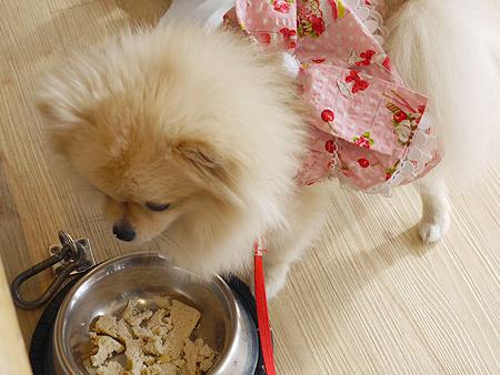 2009/11/27 DOG GARDEN鶴ヶ島1-4