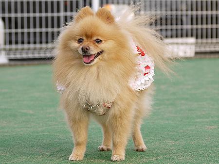 2009/11/27 DOG GARDEN鶴ヶ島1-5