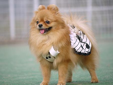 2009/11/27 DOG GARDEN鶴ヶ島1-6