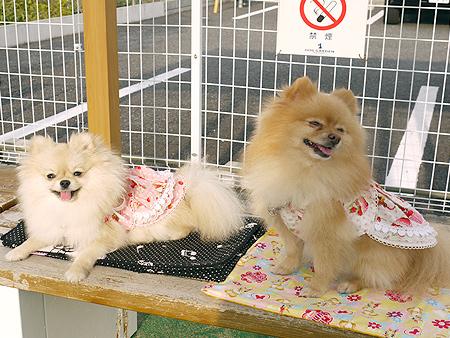 2009/11/27 DOG GARDEN鶴ヶ島1-7