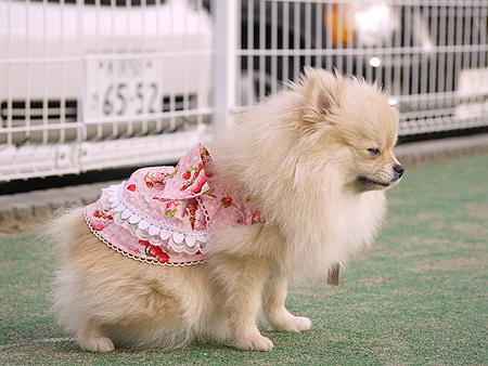 2009/11/27 DOG GARDEN鶴ヶ島1-8