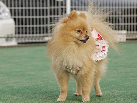 2009/11/27 DOG GARDEN鶴ヶ島1-9