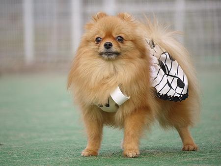 2009/11/27 DOG GARDEN鶴ヶ島1-10
