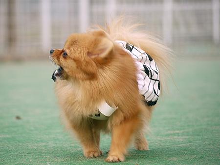 2009/11/27 DOG GARDEN鶴ヶ島1-11