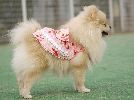 2009/11/27 DOG GARDEN鶴ヶ島1-12