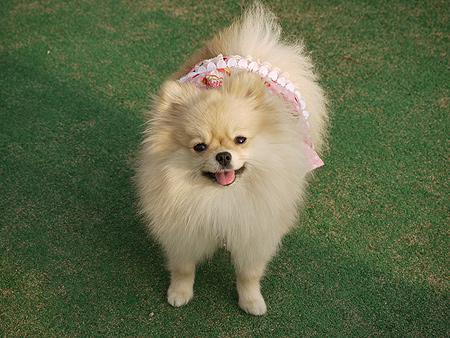 2009/11/27 DOG GARDEN鶴ヶ島2-1