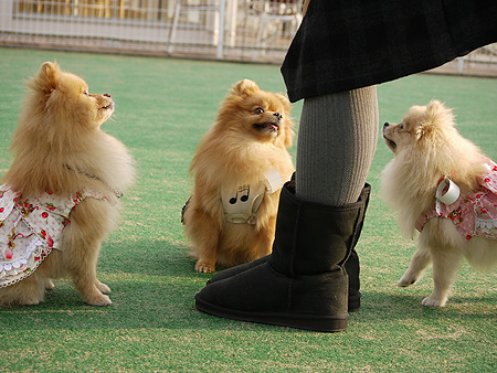 2009/11/27 DOG GARDEN鶴ヶ島2-2
