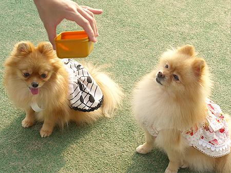 2009/11/27 DOG GARDEN鶴ヶ島2-5