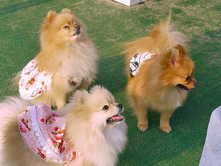 2009/11/27 DOG GARDEN鶴ヶ島2-7