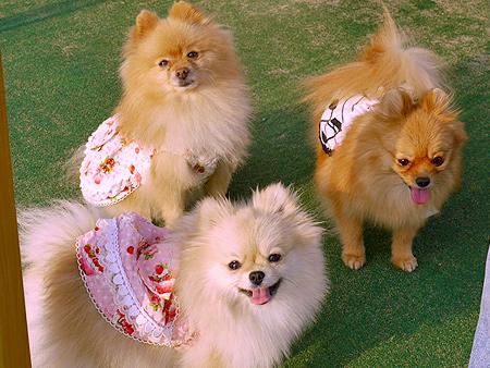 2009/11/27 DOG GARDEN鶴ヶ島2-8