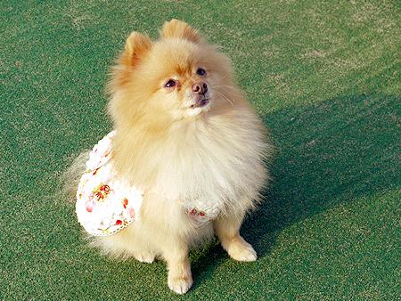 2009/11/27 DOG GARDEN鶴ヶ島2-9