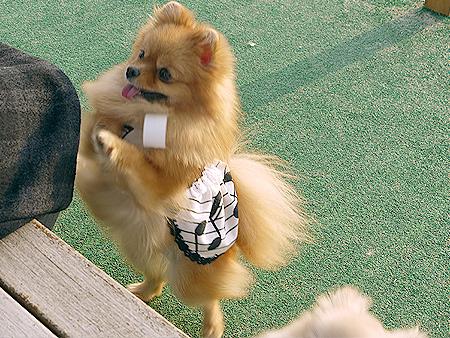 2009/11/27 DOG GARDEN鶴ヶ島2-11