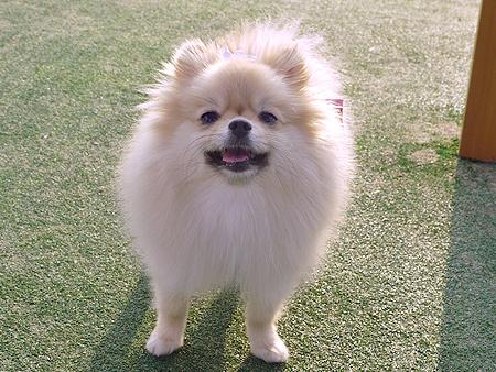 2009/11/27 DOG GARDEN鶴ヶ島2-12