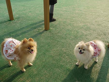 2009/11/27 DOG GARDEN鶴ヶ島2-13