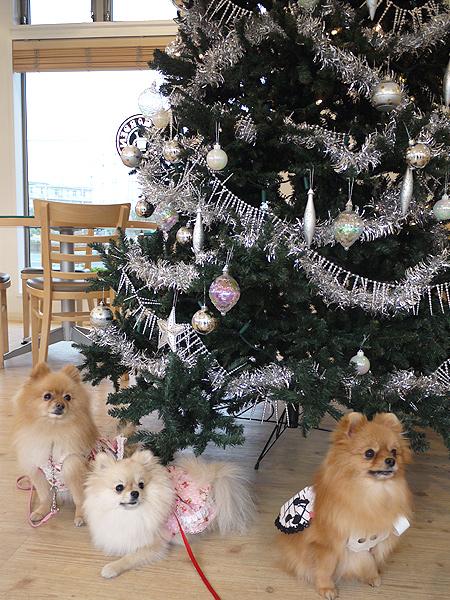 2009/11/27 DOG GARDEN鶴ヶ島3-1