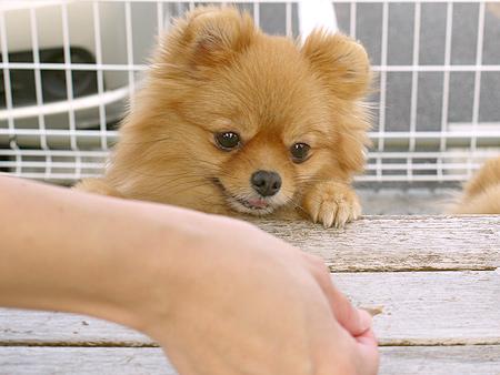 2009/11/27 DOG GARDEN鶴ヶ島3-2