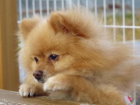 2009/11/27 DOG GARDEN鶴ヶ島3-6