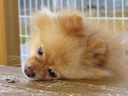 2009/11/27 DOG GARDEN鶴ヶ島3-7