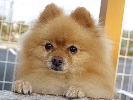 2009/11/27 DOG GARDEN鶴ヶ島3-8