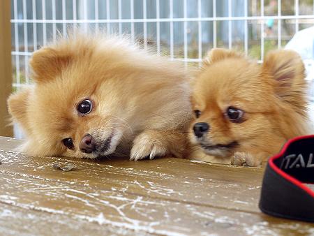 2009/11/27 DOG GARDEN鶴ヶ島3-9