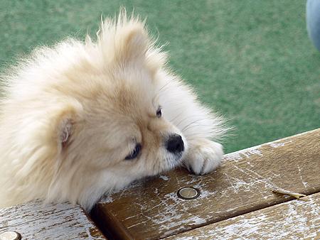 2009/11/27 DOG GARDEN鶴ヶ島3-12