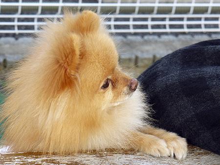 2009/11/27 DOG GARDEN鶴ヶ島3-15