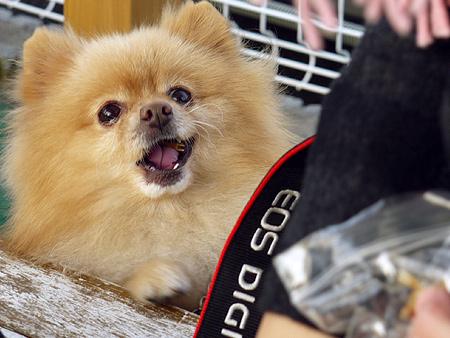 2009/11/27 DOG GARDEN鶴ヶ島3-16