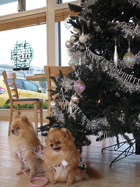 2009/11/27 DOG GARDEN鶴ヶ島3-18