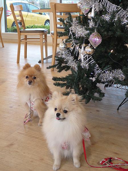 2009/11/27 DOG GARDEN鶴ヶ島3-19