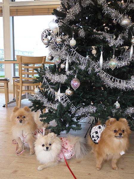 2009/11/27 DOG GARDEN鶴ヶ島3-21