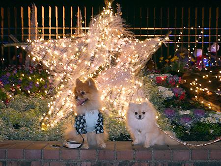 2009/12/6 昭和記念公園イルミ2